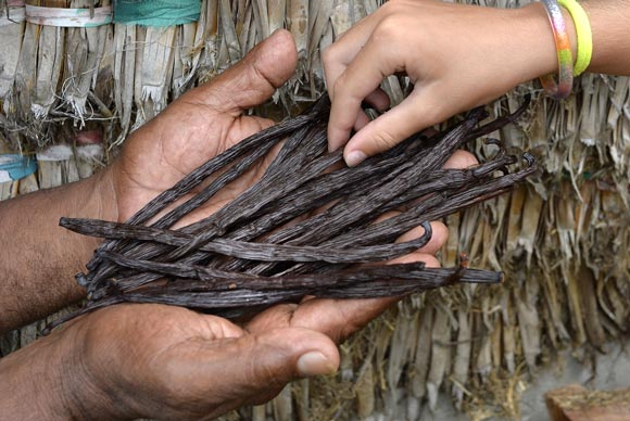 vanilla in new caledonia